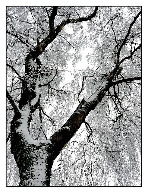 winter-385640_640