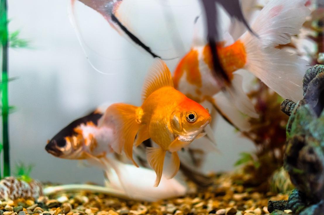 aquariums-1867308_1280